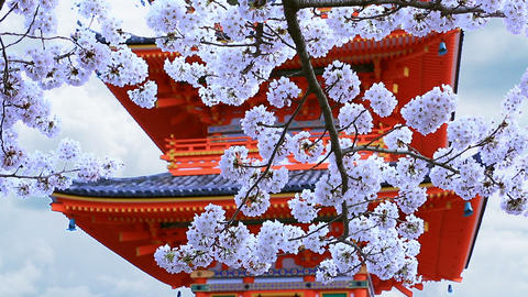 Pagoda And Cherry Blossoms With Sky And Mountains On The Background stock footage