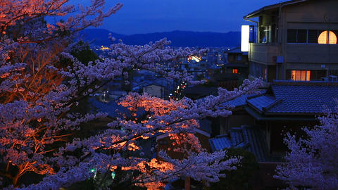 Evening. Cherry blossom season in Kyoto ライブ動画
