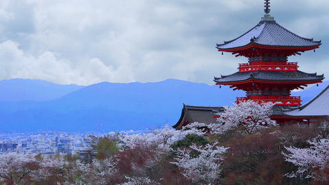 Pagoda with clouds and cherry blossoms on the background Footage