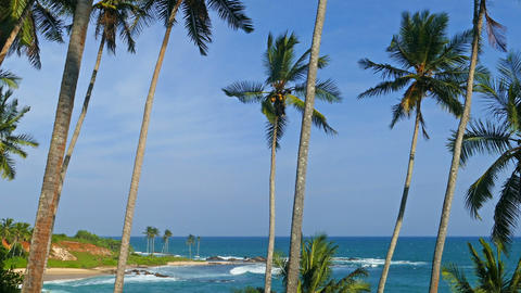 beautiful landscape with sea and coconut palms Footage