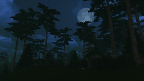 Pine Wood Under Full Moon stock footage