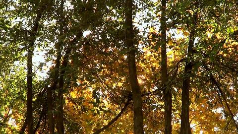 Sun And Autumn Trees stock footage