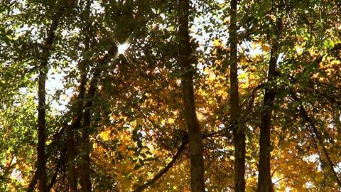 Sun And Autumn Trees lizenzfreie Videos