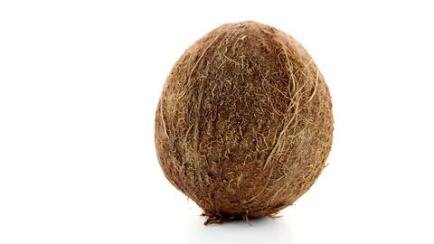Coconut Footage