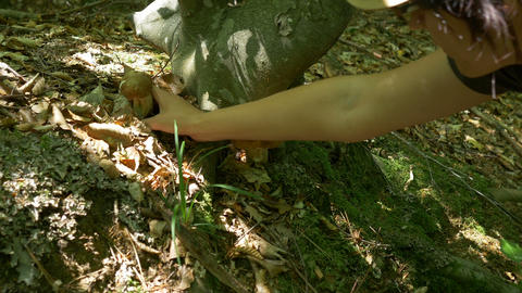 Picking Mushrooms In The Woods stock footage