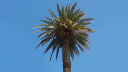 Palm tree on a blue sky Stock Video Footage