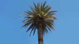 Palm Tree On A Blue Sky stock footage