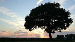 Sunset Clouds Speedzoom Tree Time Lapse 4k UHD 11664 stock footage