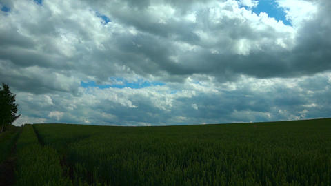 小麦畑 ビデオ