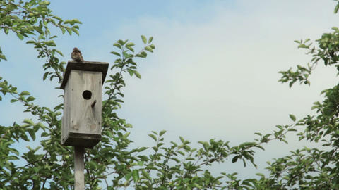 Birdhouse With Bird On The Tree stock footage