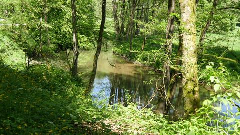 Bach umgeben von Bäumen Footage