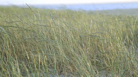 Beach Wild Weeds In The Wind stock footage