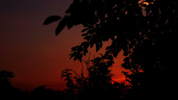 Sundown With Silhouettes Of Trees, Pan stock footage