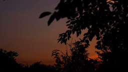Sundown With Silhouettes Of Trees Branches, Pan Footage