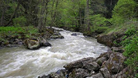 Mountain River In Borjomi, Georgia stock footage