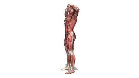 筋肉マン Animation