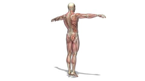 人体模型 回転
