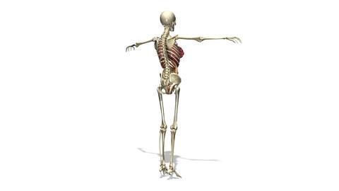 人体模型 Stock Video Footage