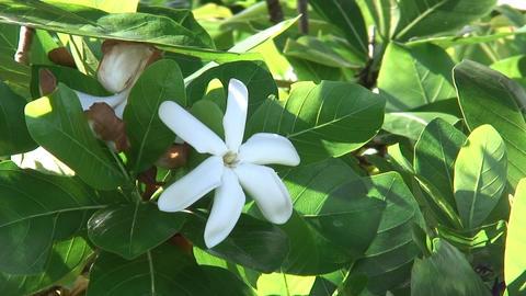 FlowersInGuam01 Stock Video Footage