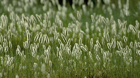 Grass on wind Stock Video Footage
