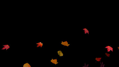 Falling Leaves 01 Stock Video Footage