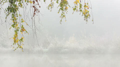 Autumnal Birch Branches Stock Video Footage