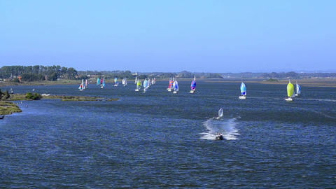 Sailboats in regatta Footage