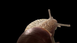 snail top exit isolated Stock Video Footage