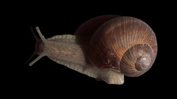 snail top isolated 02 Stock Video Footage
