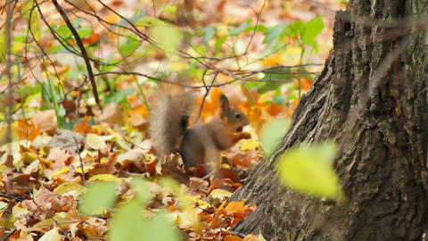 Squirrels, sequence, Live Action