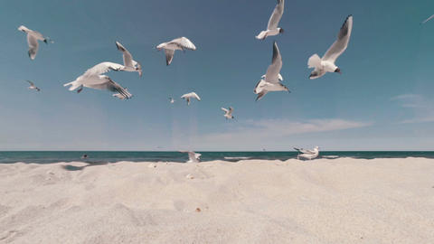 Closeup of a flock of seagulls in a feeding frenzy on the beach Archivo