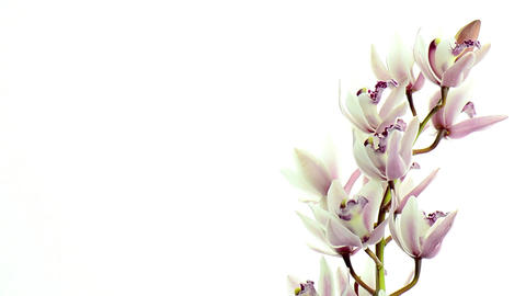 Beautiful orchids Stock Video Footage