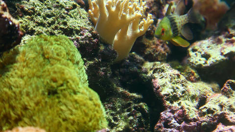 Underwater world Stock Video Footage