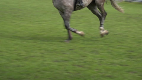 horse race jump close up 02 Stock Video Footage