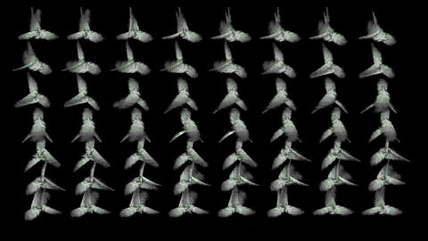 Rotation of white flying feather... Stock Video Footage