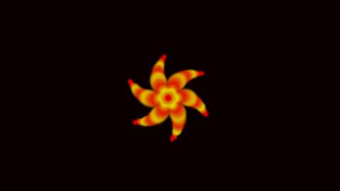 Dazzling orange flower... Stock Video Footage
