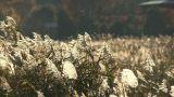 Lakeside grassland in Kawaguchi Lake,Yamanashi,Japan Footage