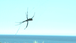 Spider In A Web stock footage