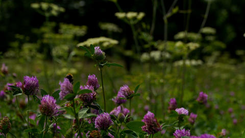 Wild Flowers On The Glade stock footage