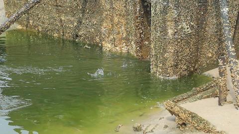White-leg Shrimp Jumping stock footage