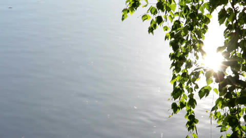 Leaves And Water stock footage