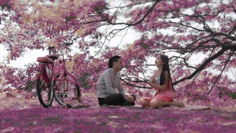Sakura Scenes, Asian Boy And Cute Girl stock footage
