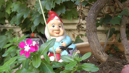 Dwarf In A Garden stock footage