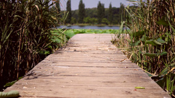 Wooden pier on Lake With Reed And Lotus Leaf Footage