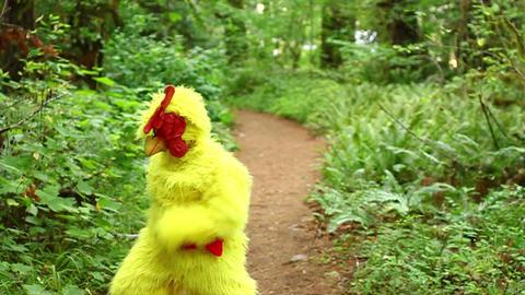 Chicken Dancing In The Woods stock footage