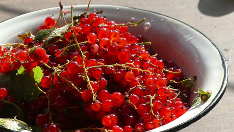 red currants in a bowl Footage