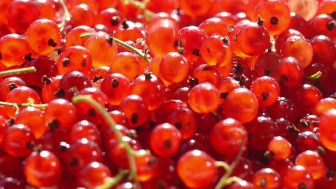 Red currants in a bowl sprinkling Footage