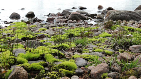 Mossy stones at a lake Footage