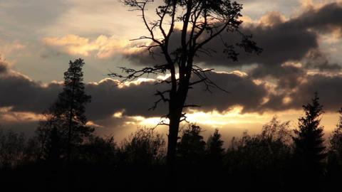 Evening trees Footage