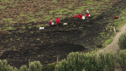 Unidentified Group Of People Manual Farming In Ecuador Footage